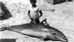 Dolphin kills may provoke US ban