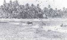 The proposed site for a sewage (Credit: S Gopalkrishnan Warrior)