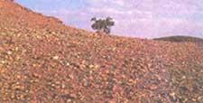 New-look farming fumbles to an erratic start