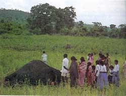 Rogue elephants in the backyard