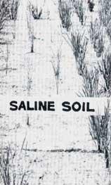 Soil scan