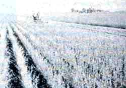 Who shall survive the prairie?