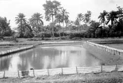 A view of the fish pond at Ol