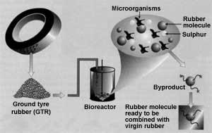 Promising bacteria