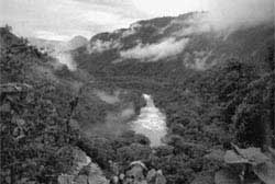 In danger: frontier forests in