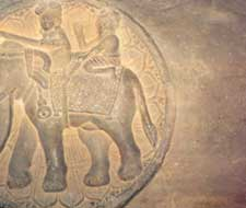 Animals such as the elephant a
