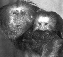 Cozy twosome: One of the many< (Credit: BBC Wildlife)