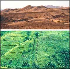 And then there was green: a vi (Credit: Anil Agarwal and Sunita Narain)