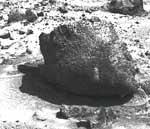 Mars had life