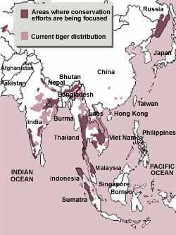 Tigers: dwindling fast
