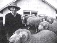 Shearers poisoned