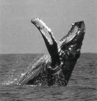 In the deep: the whaling issue