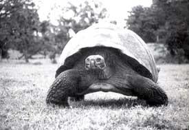 Tortoise trouble