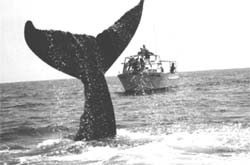 A whale of problem