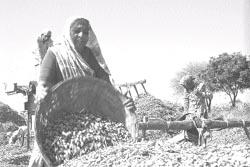 mandlikpur (Rajkot) Life with Recharged Wells