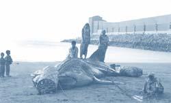 Ban whaling