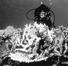 Populations of marine life wi (Credit: Lynn Funkhouser)