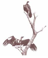 Vultures on death row