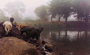 RURAL WATER HARVESTING  MADHYA PRADESH