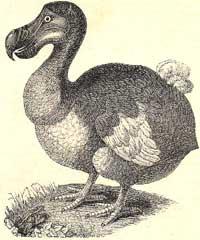 Dodo's tale