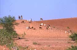 More land for landless