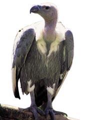 Flight to extinction