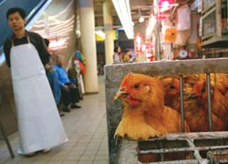 Nothing to cluck about (Credit: Reuters)