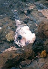 Sharks bear brunt of seasonal fishing frenzy