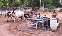 Oxen power