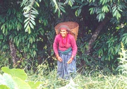 Nepal squeezes forest users