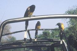 The birds sing...