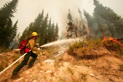 US wildfire act could aid timber industry