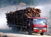 Rampant felling continues in I (Credit: WWF-Canon/Alian Compost)