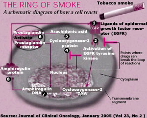 How smoking causes cancer