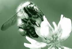 Pesticide fatigue