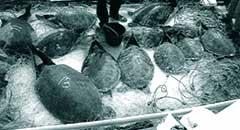 Churn turtle