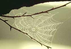 Super silk