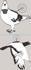 Bird's eyeview