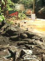 Dumped: Sludge threatens ghats