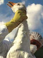 Cull call: Bird flu sparks cru