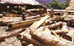 India's sawmill policy filled with loopholes
