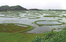 Loktak lake: Scenic and ecolog