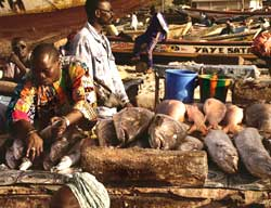 EU signs biggest fisheries deal with Mauritiana