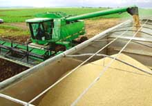EC stops import of US long-grain rice