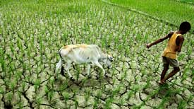 Monsoon-friendly Assam reeling under drought