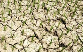 El Nino, Indian monsoons may be linked