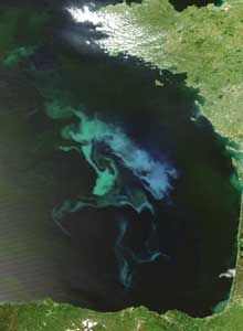 Tracking Phytoplankton (Credit: NASA)