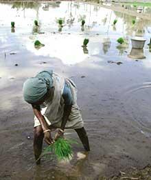 Irrigation influences monsoon, says study