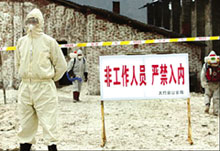 A quarantined poultry farm in<
