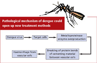 Over production of enzyme triggers dengue